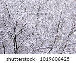 severe snowfall cover on tree...   Shutterstock . vector #1019606425