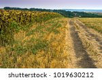 late summer in the rural... | Shutterstock . vector #1019630212