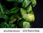 green leaf leaves background... | Shutterstock . vector #1019641966