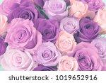 bouquet of roses    Shutterstock . vector #1019652916