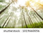 beautiful park with big pine... | Shutterstock . vector #1019660056