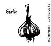 garlic sketch vector... | Shutterstock .eps vector #1019672356