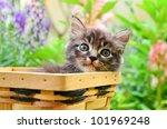 Stock photo kitten in basket 101969248