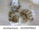 trail of man in dirty boots and ... | Shutterstock . vector #1019699842