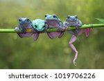 tree frog  dumpy frog on branch | Shutterstock . vector #1019706226