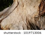 beavers building a dam in the... | Shutterstock . vector #1019713006