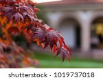 autumn brown and red leaves | Shutterstock . vector #1019737018