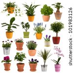 Flowers And Plants In Pots...