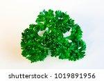 pastel white background | Shutterstock . vector #1019891956
