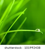 Water Drop On Grass Blade With...