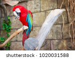 Red And Blue Parrot Macaw On...