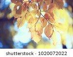 autumn leaves background  ...   Shutterstock . vector #1020072022
