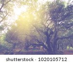 garden with olive trees and hot ... | Shutterstock . vector #1020105712