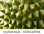 the surface of durian peel was... | Shutterstock . vector #1020120556