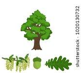 tree oak  branch with... | Shutterstock .eps vector #1020130732