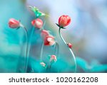 Stock photo beautiful pink flowers anemones and ladybug in spring nature outdoors against blue sky macro soft 1020162208