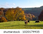cattle in the fields above a... | Shutterstock . vector #1020179935
