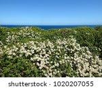 Oceanic Coastal Native Plant...