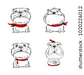 hand drawn bulldogs. four dog... | Shutterstock .eps vector #1020226012