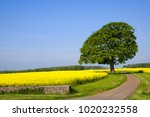 a single track rural country... | Shutterstock . vector #1020232558