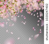 vector background with spring... | Shutterstock .eps vector #1020247402
