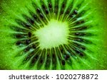 close up macro kiwi fruit | Shutterstock . vector #1020278872
