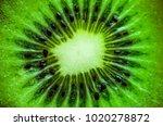 close up macro kiwi fruit | Shutterstock . vector #1020278872