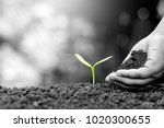 the hand of a children are... | Shutterstock . vector #1020300655