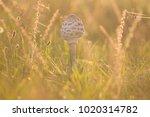 mushrooms in epic warm light in ... | Shutterstock . vector #1020314782