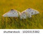 mushrooms in epic warm light in ... | Shutterstock . vector #1020315382