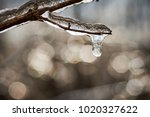 ice covered branch | Shutterstock . vector #1020327622