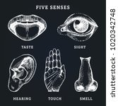images set of five human senses ... | Shutterstock .eps vector #1020342748