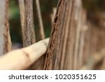 end the line | Shutterstock . vector #1020351625