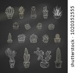 vector set of chalk cacti and... | Shutterstock .eps vector #1020352555