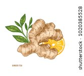 ginger root  citrus and tea... | Shutterstock .eps vector #1020385528