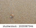 fossil shell on the sand beach  ... | Shutterstock . vector #1020387346