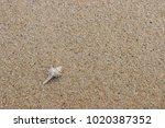 fossil shell on the sand beach  ... | Shutterstock . vector #1020387352