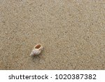 fossil shell on the sand beach  ... | Shutterstock . vector #1020387382