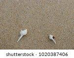 fossil shell on the sand beach  ...   Shutterstock . vector #1020387406