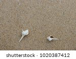 fossil shell on the sand beach  ...   Shutterstock . vector #1020387412