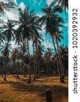 phangan's beautiful palms.  | Shutterstock . vector #1020392932