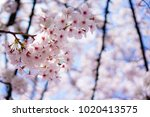 close up and selective focus... | Shutterstock . vector #1020413575