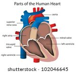 illustration of parts of the... | Shutterstock .eps vector #102046645
