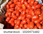 red tomato in container with... | Shutterstock . vector #1020471682