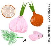 yellow  red and spring onion... | Shutterstock .eps vector #1020482932