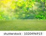nature spring grass background... | Shutterstock . vector #1020496915