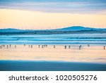 Seagulls Silhouettes On The...