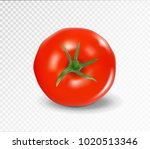 tomato top side. realistic... | Shutterstock .eps vector #1020513346