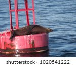 sea lions on a buoy | Shutterstock . vector #1020541222