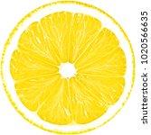 juicy yellow slice of lemon... | Shutterstock . vector #1020566635